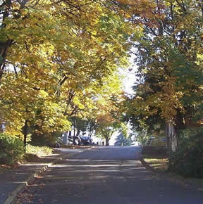 Fall Leaves Along Street