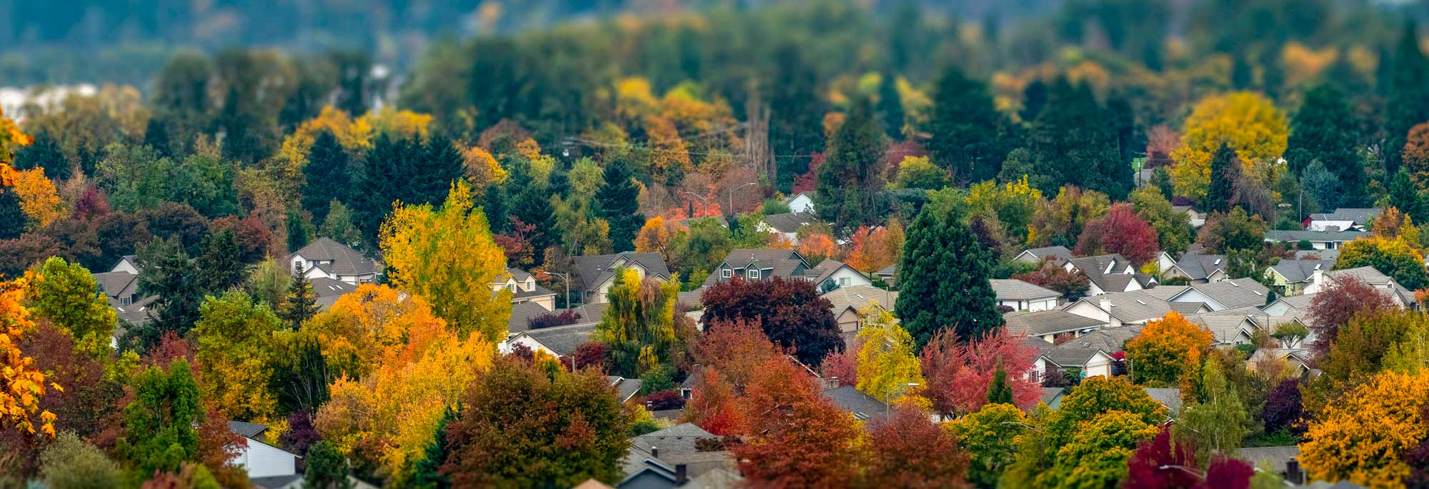 Fall Colors in Springfield Bird's Eye View