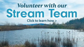 Volunteer with our Stream Team