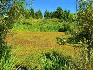 Wetland Mill Race Study Area
