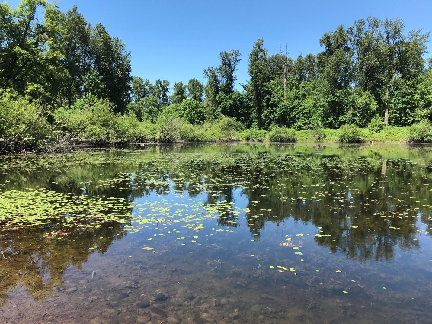 Wetland Georgia Pacific Mill Race Study Area